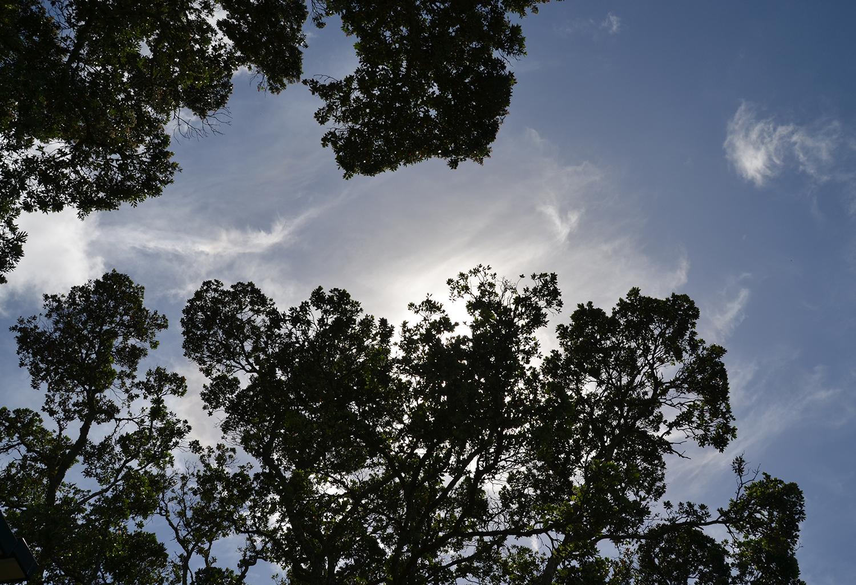 Birkenhead Skyline1.jpg
