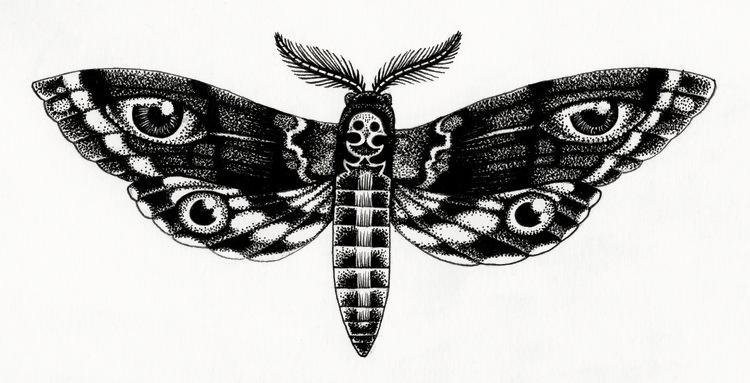 Papillon+nuit+illustration+amandine+delaunay.jpeg