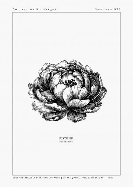 Pivoine-A5-WEB.jpg
