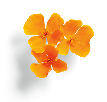 US_CaliforniaPoppyD.png