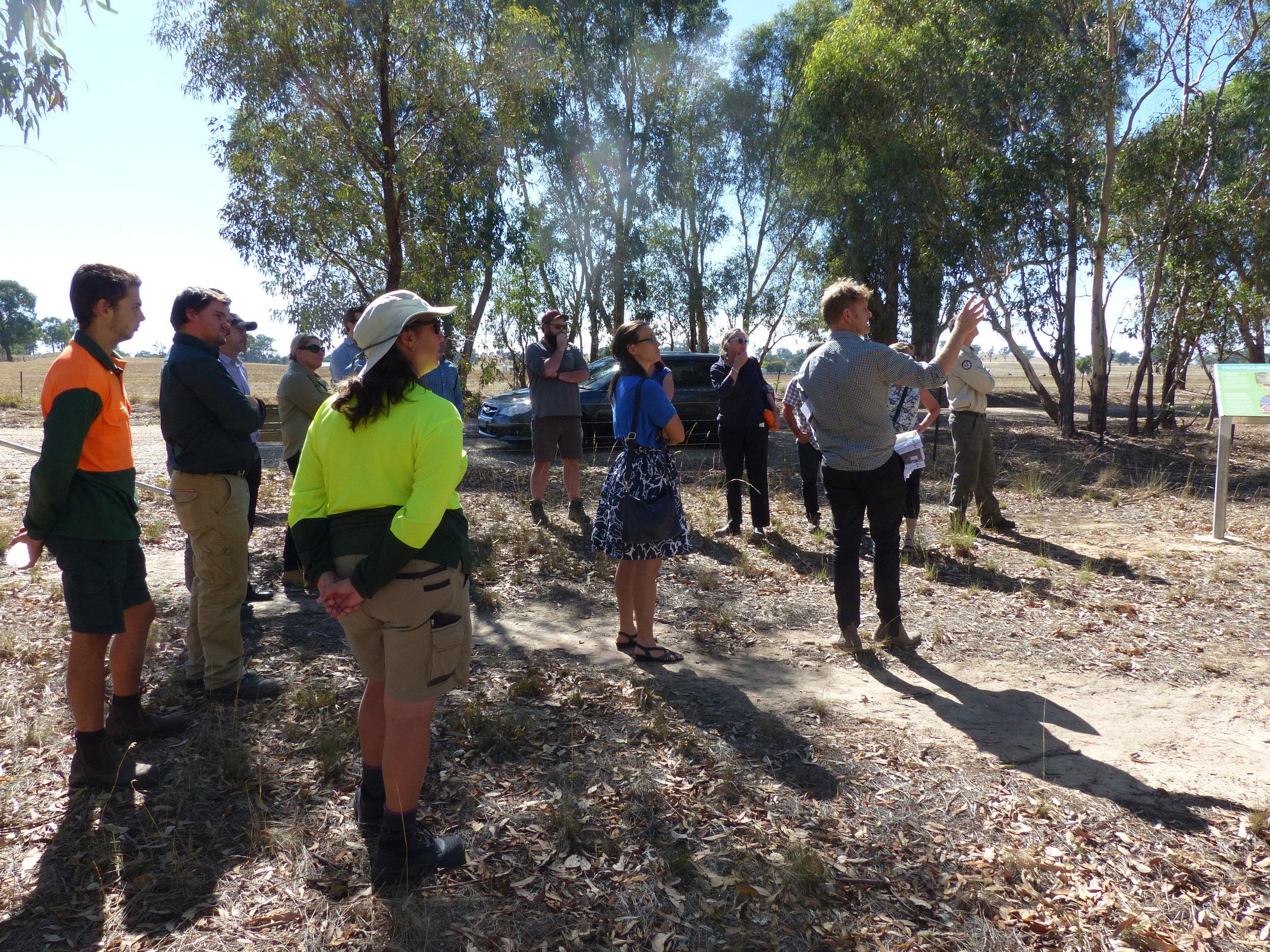 Hollow bearing tree Workshop_site visit 2_28thFeb2018.JPG