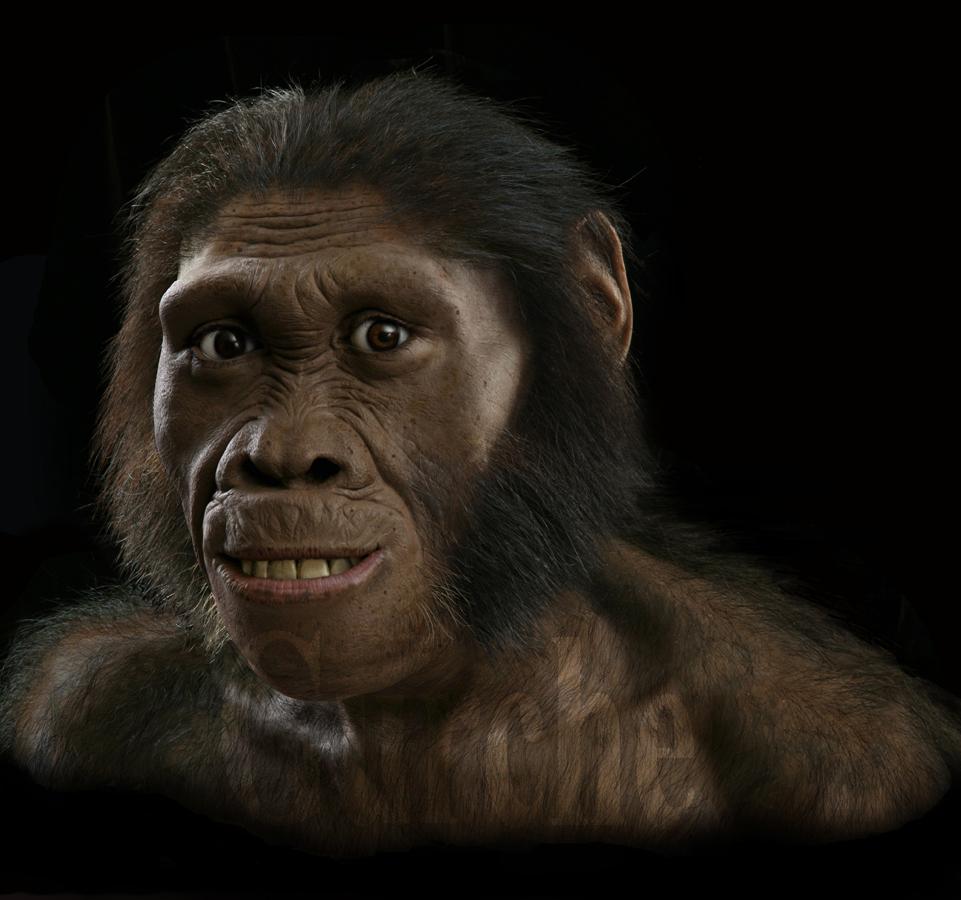 Australopithecus sediba MH 1 head reconstion
