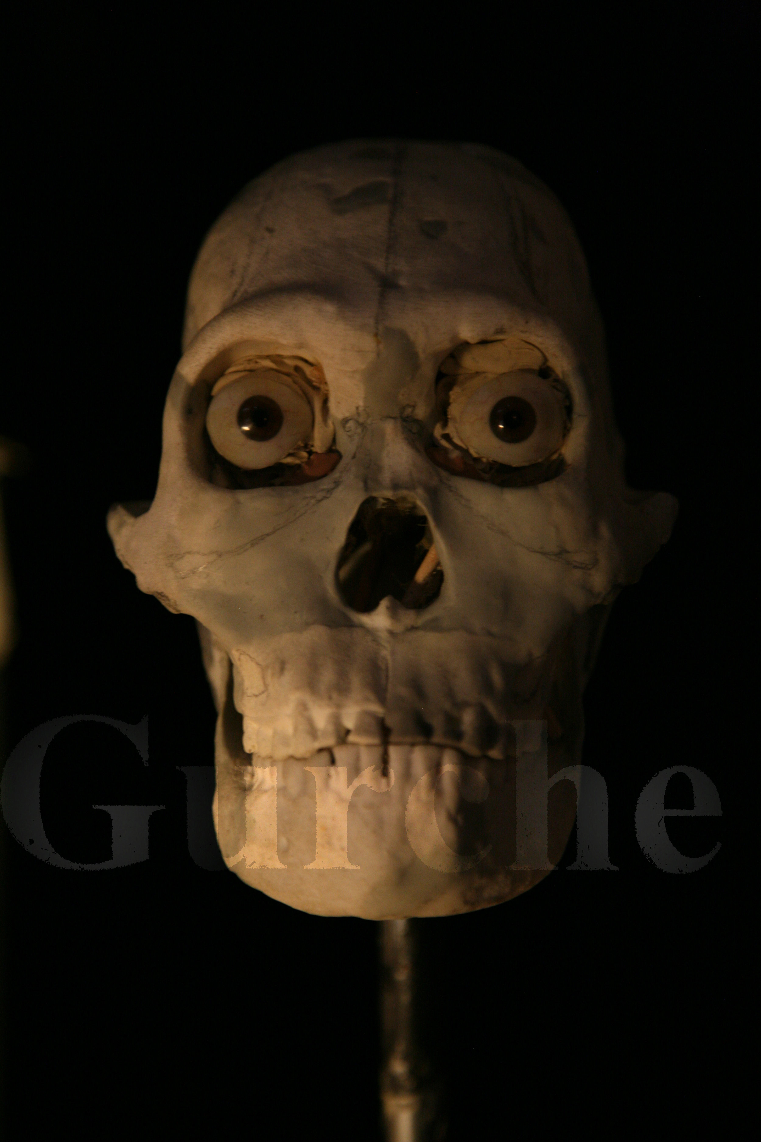 Homo naledi reconstruction in progress 1 IMG_1074.jpg