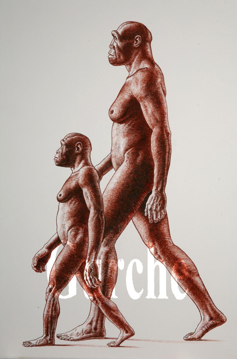 IMG 824 H habilis and H erectus females walking.jpg