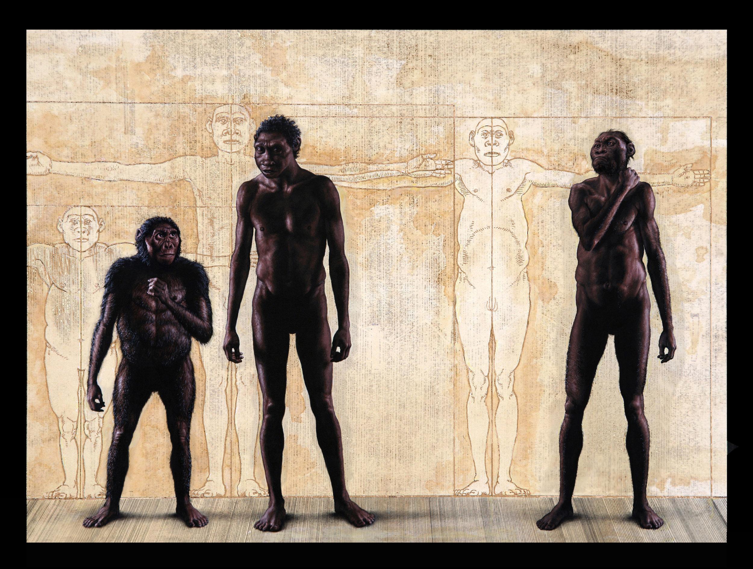 Homo erectus  (Turkana Boy, center) with Lucy ( Australopithecus afarensis ) and  Homo naledi .