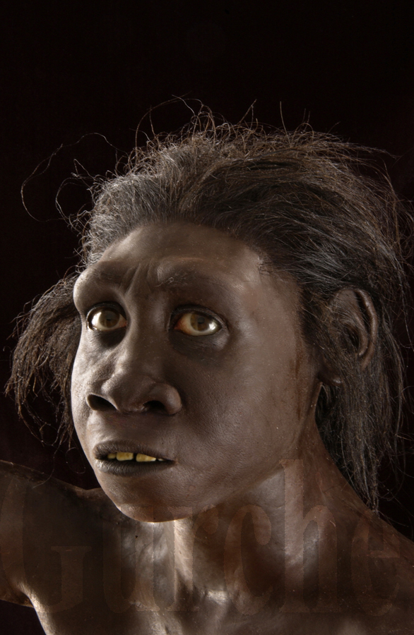 WT 15,000, a young  Homo erectus  from east Africa.