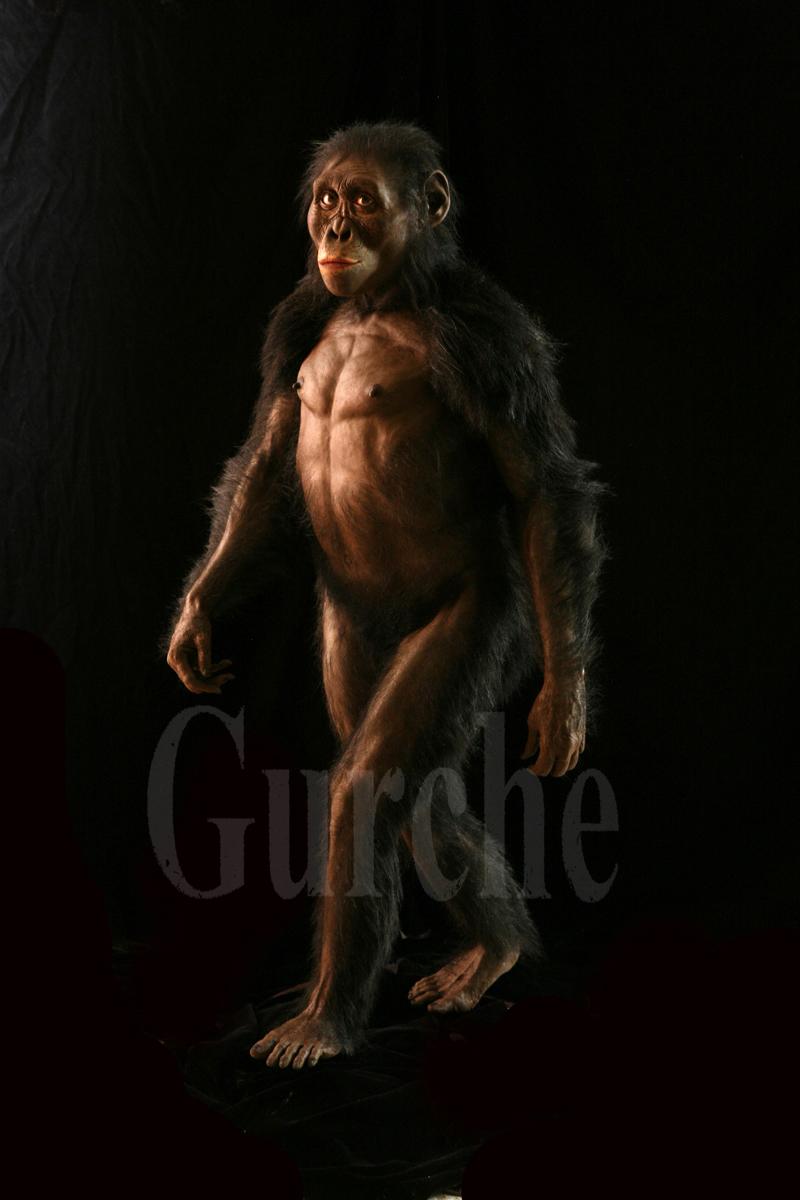 Img 792  Reconstruction of Lucy Australopithecus afarensis.jpg.jpg