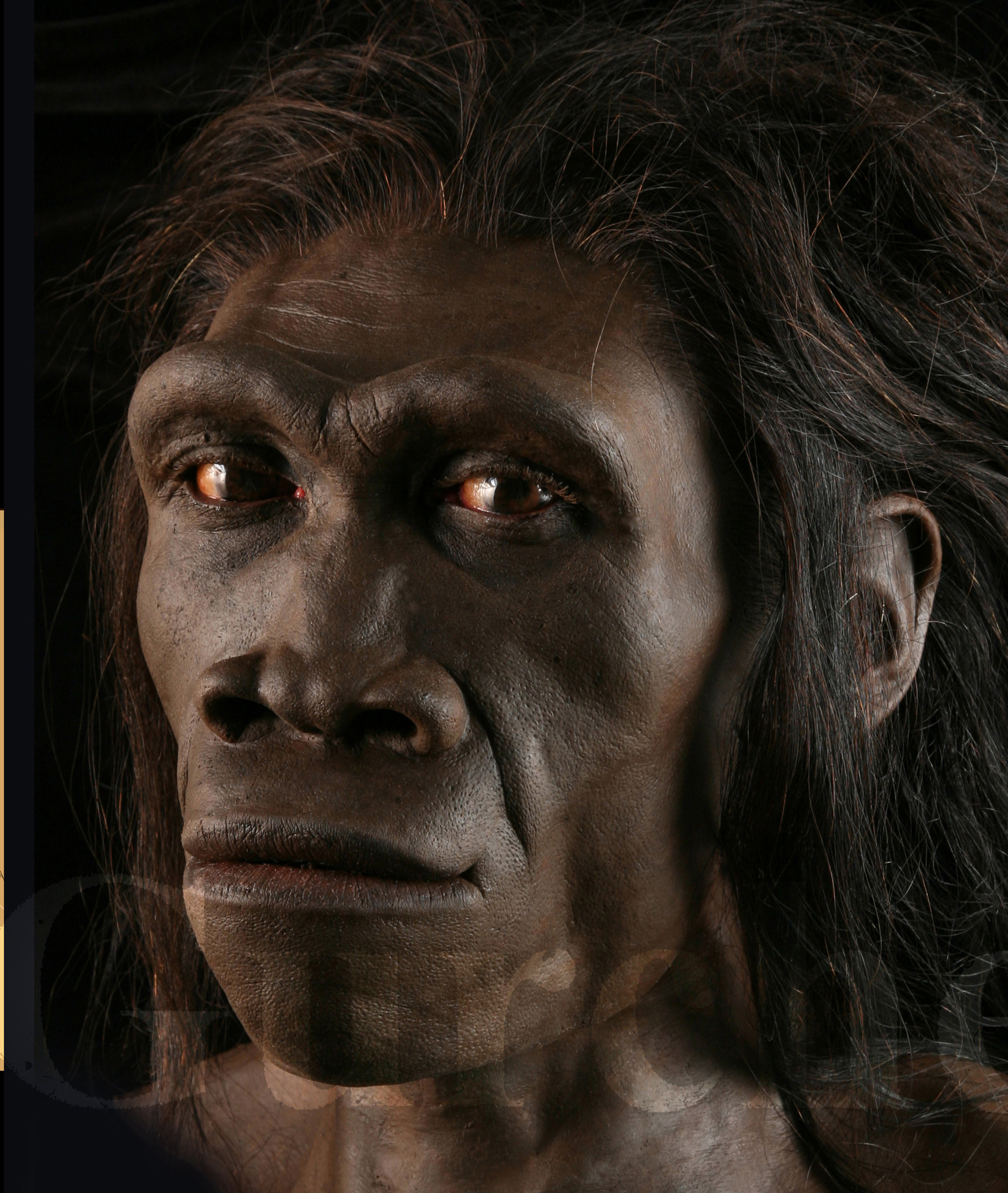 IMG 993 Homo erectus female based on ER 3733.jpg