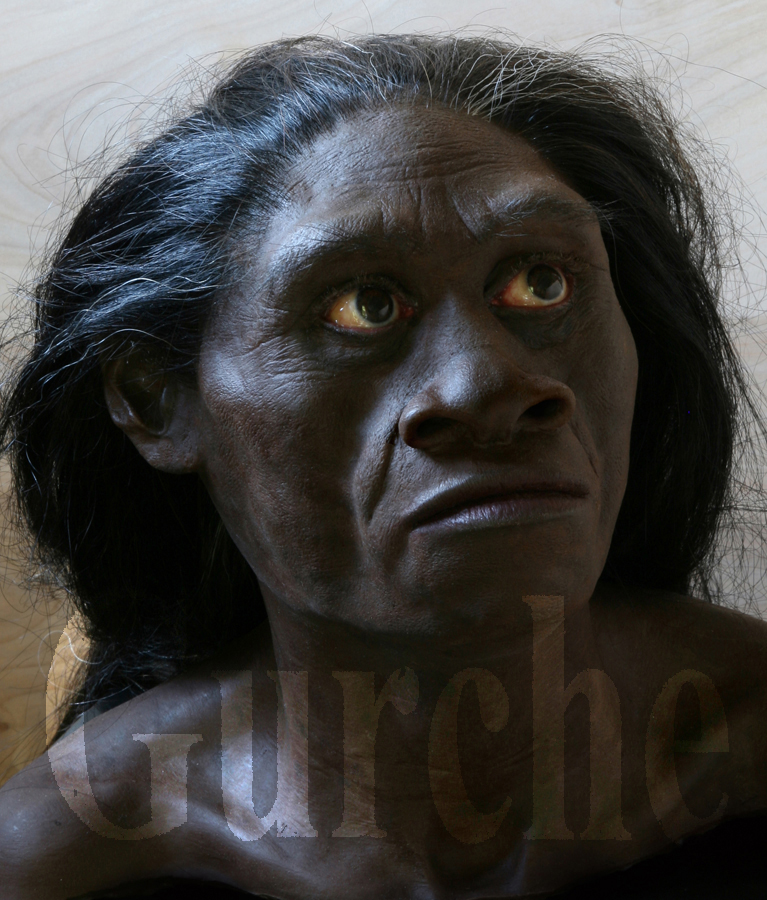 Image 792 Homo floresiensis female based on LB1.jpg