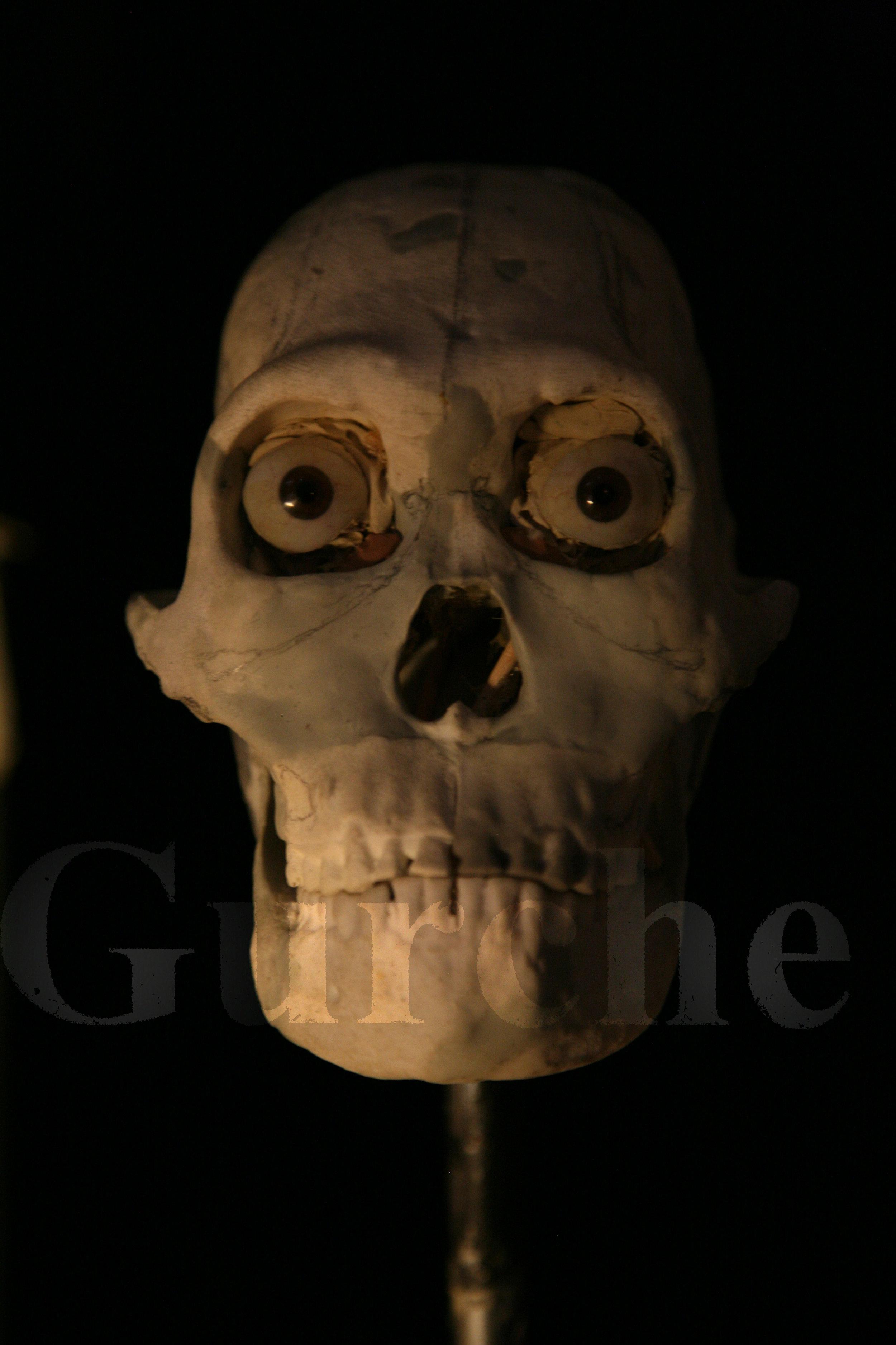 Homo naledi reconstruction in progress 1 IMG_1074.jpg