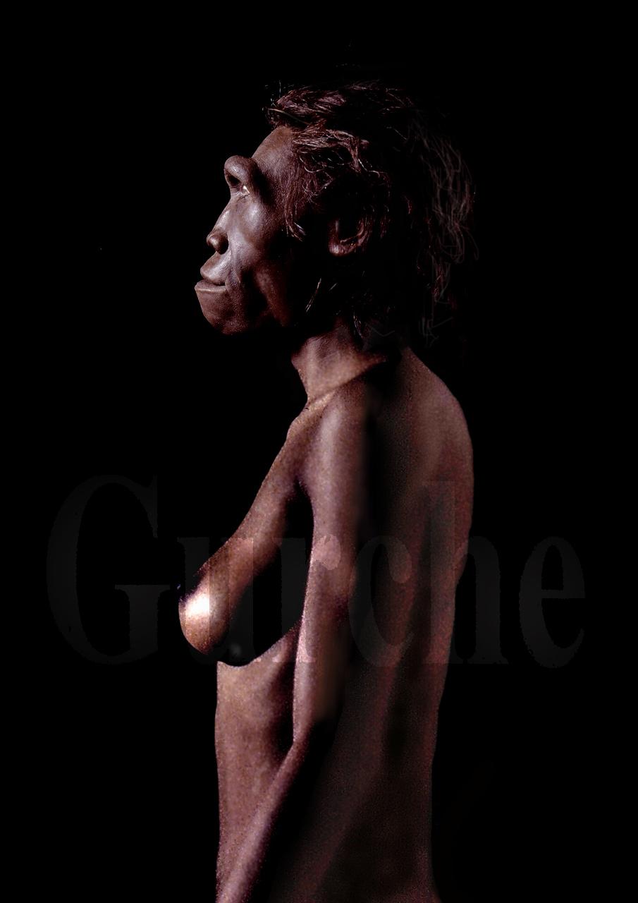 Homo erectus adult female.