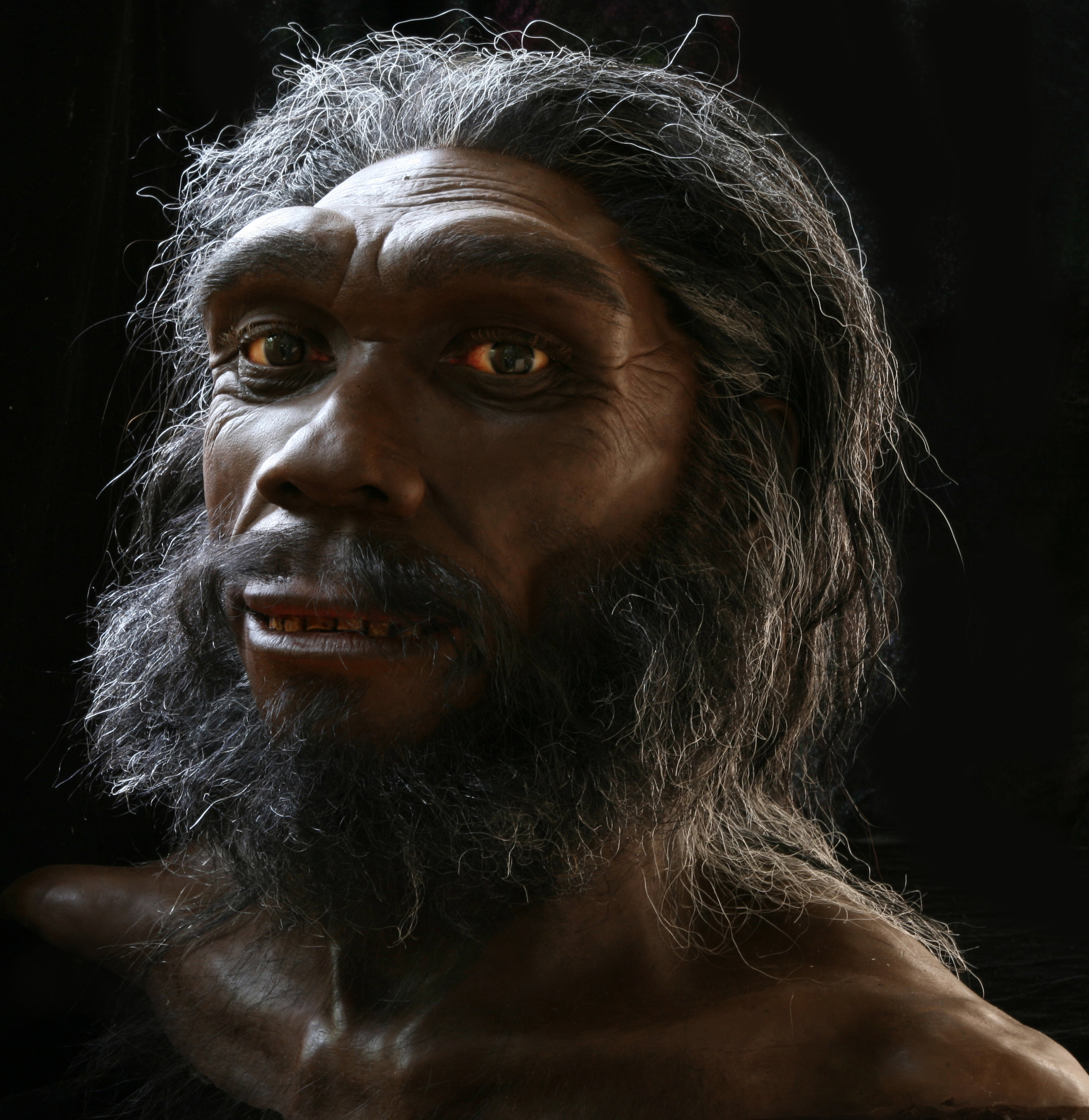 H. heidelbergensis  based on the Kabwe skull. On exhibit in the Smithsonian's Hall of Human Origins.