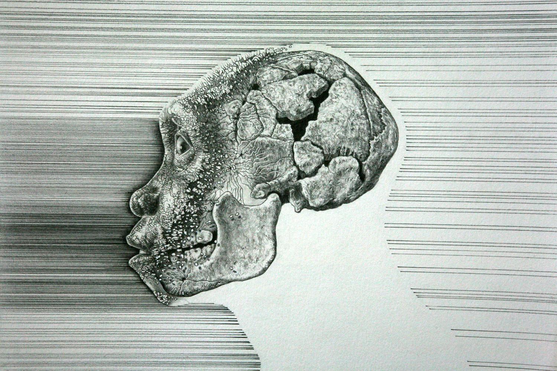 Homo erectus , juvenile male, Kenya