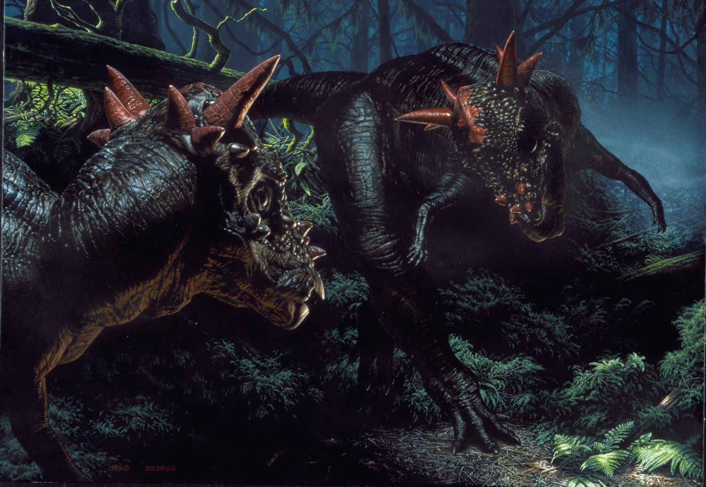 Stygimoloch . This painting, painted for the January, 1993 issue of  National Geographic Magazine  but not used, depicts two  Stygimoloch  facing off. Their odd headgear is interpreted as visual display structures. In a broad range of vertebrates, such displays often resolve a conflict before it becomes a fight.  $80,000
