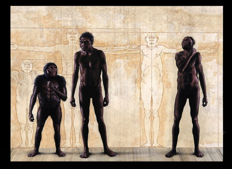 This painting, commissioned by National Geographic in 2014, shows, from left to right, Lucy, Turkana Boy and an adult male  Homo naledi . The discovery of  Homo naledi  was remarkable for several reasons. Here was a form of early Homo that was very primitive in some regards (such as small brain size), but almost modern looking in others. The cave deposits in which it was found were difficult to date, so the team did not yet know how old the fossils were, but the wealth of primitive features suggested that it was at the base of the genus  Homo . If so, enlargement of the brain, long considered the hallmark of  Homo , was not part of the genus' origin.  The find was of spectacular size; more than 1,500 bones were taken out of the cave, from nearly every part of the body. On top of that, the remains were found deep in a cave with a convoluted, difficult entrance. No bones of other animals, except for a few bird bones, were found with the hominin bones, an unheard of circumstance among hominin finds. After ruling out other alternatives, the team proposed that bodies were dragged into the cave, in an early (earliest?) example of a funerary practice.   National Geographic  got very interested in this find, and sent me to South Africa again to gather information so that I could reconstruct it. Lee threw the doors of the hominin vault at the University of the Witwatersrand wide, and let me study the fossils until long after everyone else went home.  What emerged from study of these fossils was yet another unique combination of primitive and advanced features. You can see in the painting (and in the wall drawings behind the figures) that there are stark differences between the body forms of Lucy and the Turkana Boy. In some ways  Homo naledi  occupies an intermediate position.  Another big surprise occurred when a date for the find was finally obtained. It was only about 300,000 years old, not the expected nearly 3 million years old it should have been if it were the earlies