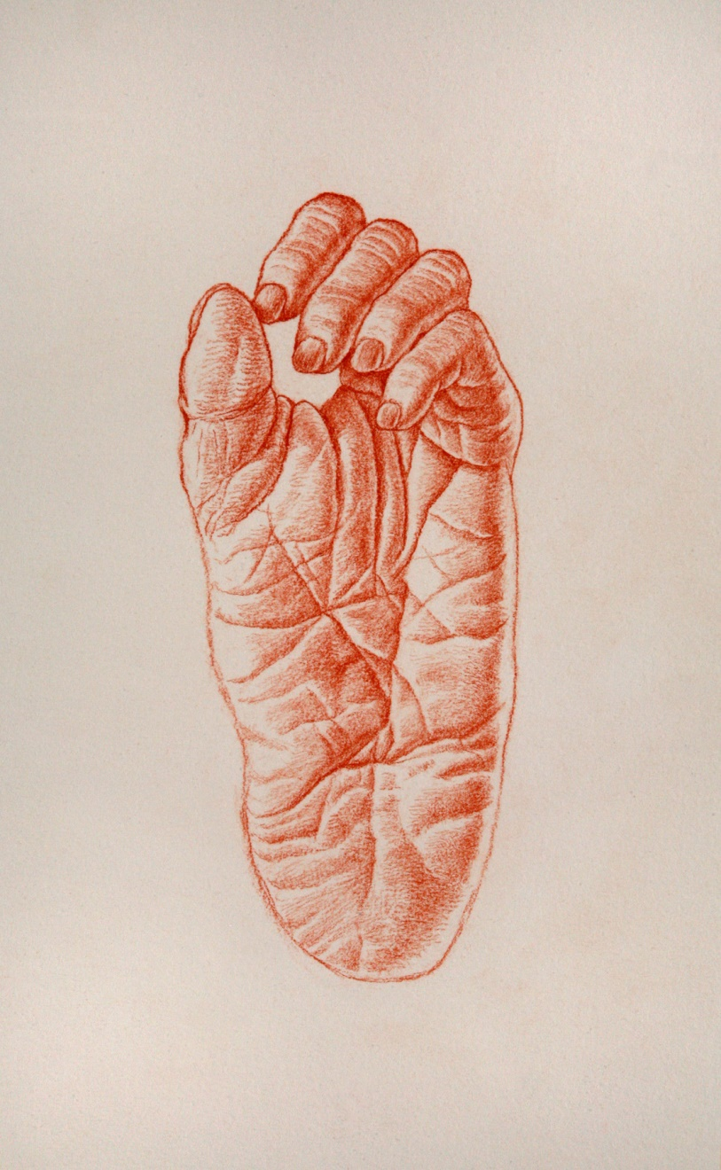 Bonobo left foot, from  Lost Anatomies  by John Gurche.  The  Lost Anatomies  collection. This 27 year labor of love is a collection of 187 drawings and paintings celebrating the visual power of the evolving human form. The human form has been the subject of intense artistic exploration for centuries. Now that the human origins sciences have extended the field for such work by revealing the precursors of the human form, artistic exploration of the  evolving  human form is possible. The hands and feet, skeletons and musculature, and faces and heads depicted in this collection are just that. The collection has now been published as a book by Abrams Books:  Lost Anatomies: the evolution of the human form . Each of these drawings is  $75,000.