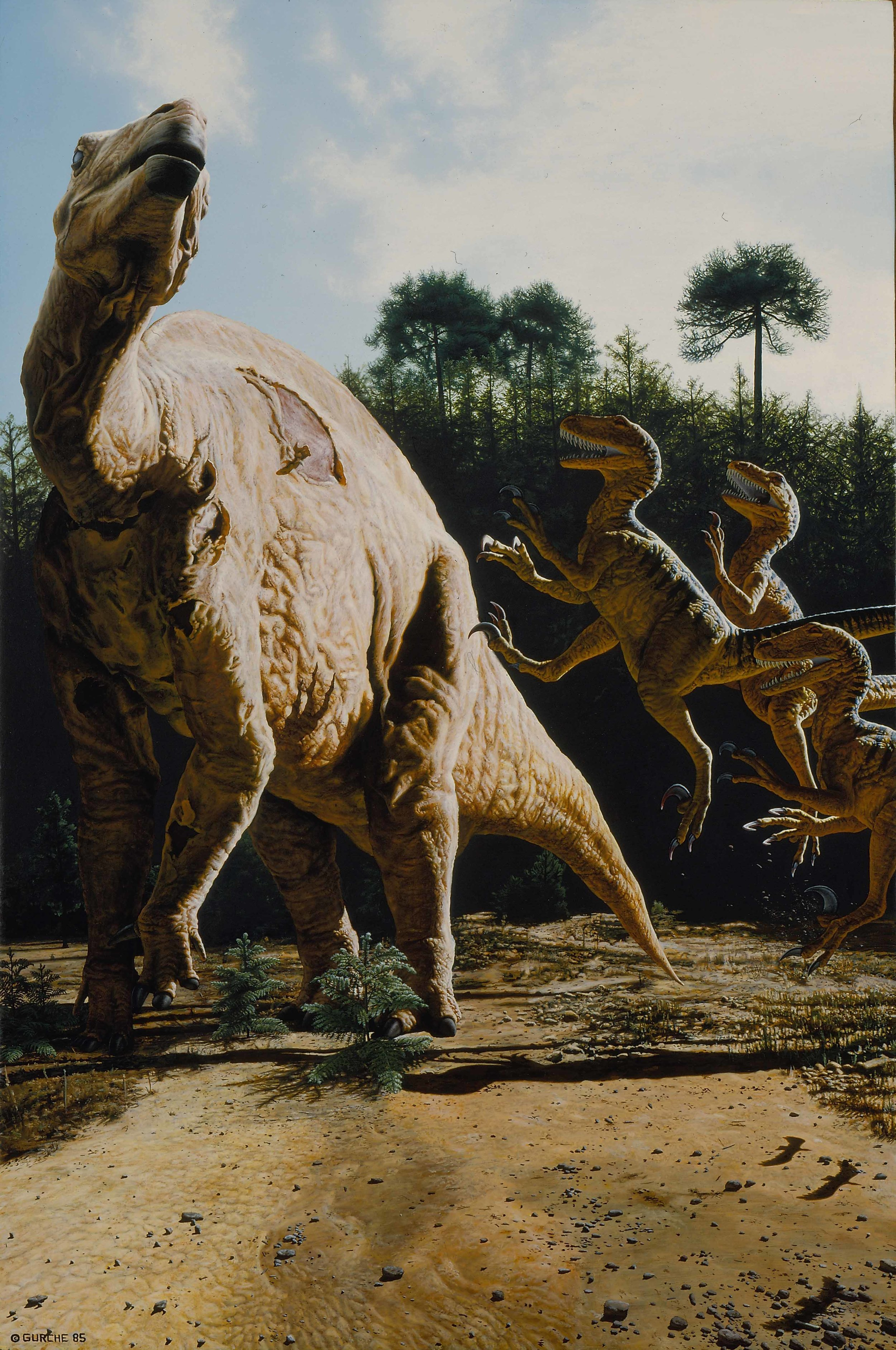 In the mid-1980s, the Smithsonian asked me to create a painted scene of  Deinonychus , the John Ostrum discovery that began the dinosaur revolution of the 80s and 90s. This scene shows three  Deinonychus , thought to be pack hunters, attacking an iguanodontid. It was later used for the cover of Don Lessom's book,  Kings of Creation .  I was moved by the very bird-like skeleton of this animal, and included the shadows of three birds in the painting. The scene would have been different if I'd done it today. Today, we know that  Deinonychus  had feathers.  $65,000