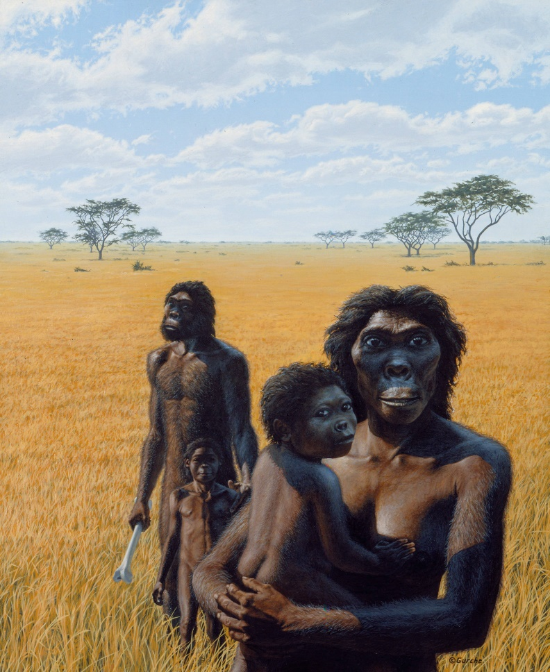 Australopithecus africanus . Cover art for  The Sex Contract  by Helen Fisher, William Morrow, 1983.  $50,000