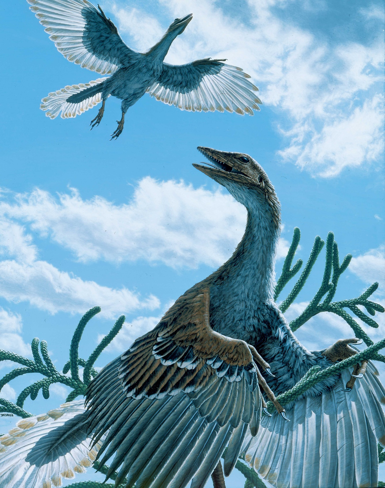 Archaeopteryx , painted for National Geographic's The  Wonder of Birds.   $50,000