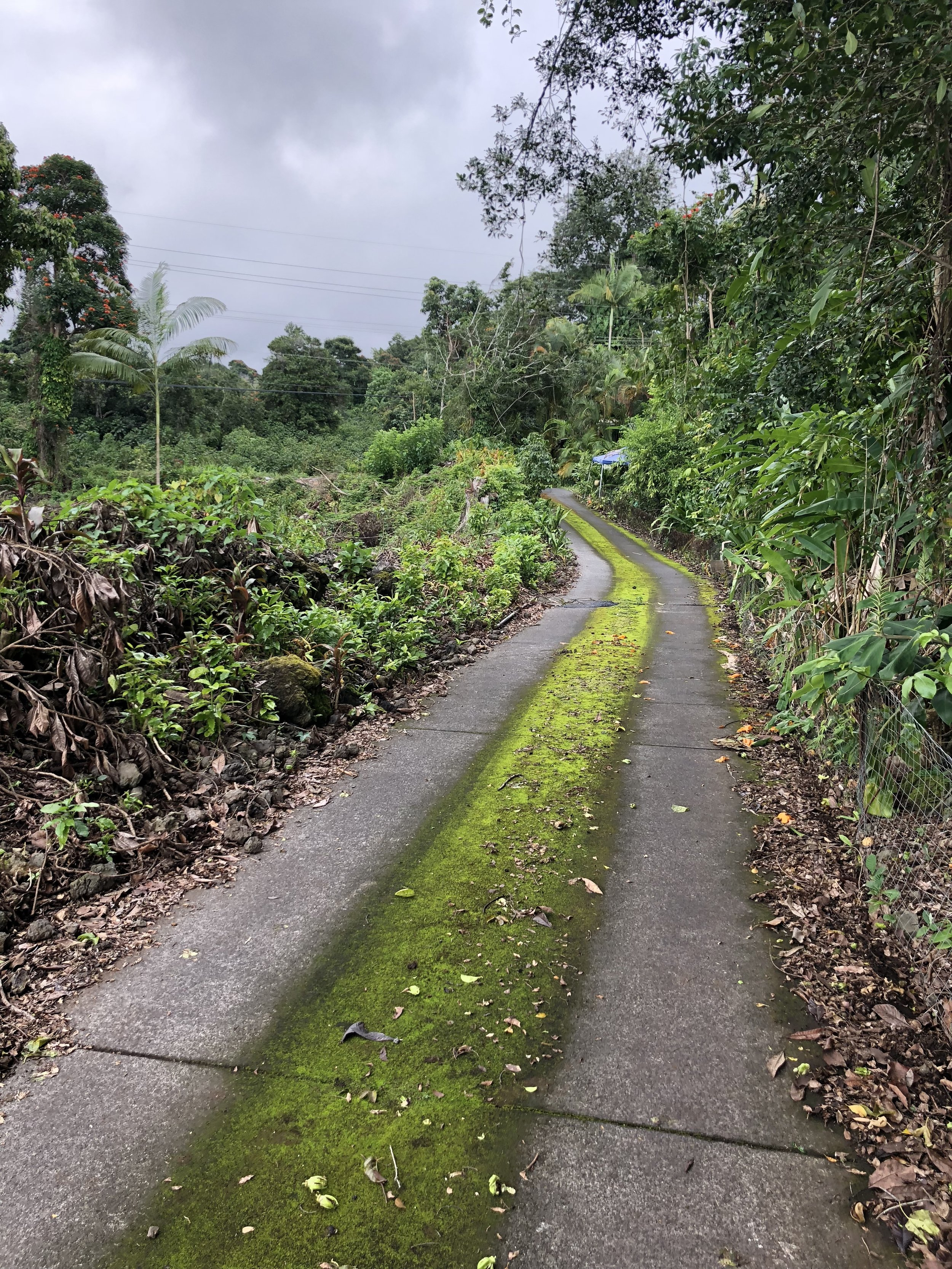 The path to and from my coffee farm rental house.