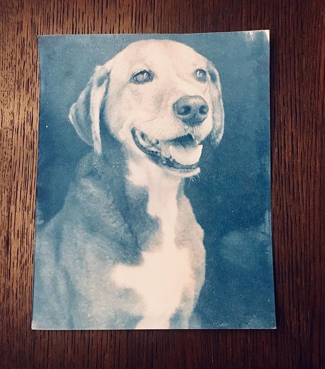 A cyanotype portrait of Fido!