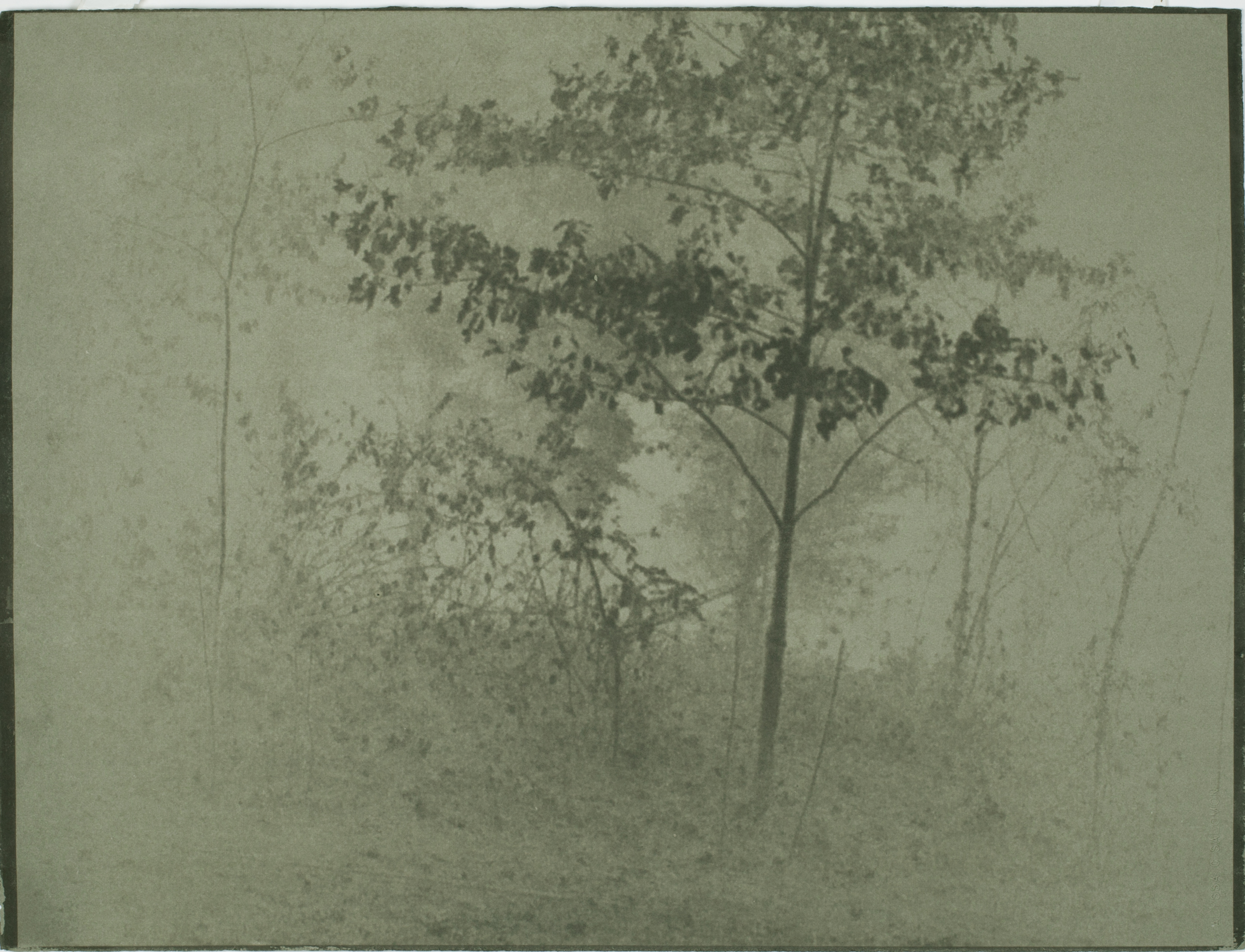 Copy of Alyssa Salomon