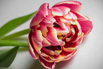 Exotic Bloom
