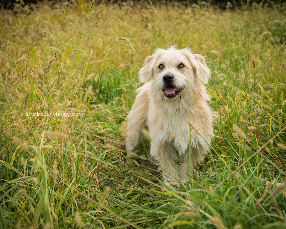 trina.bauer.photography.rescue.dog.fall.field