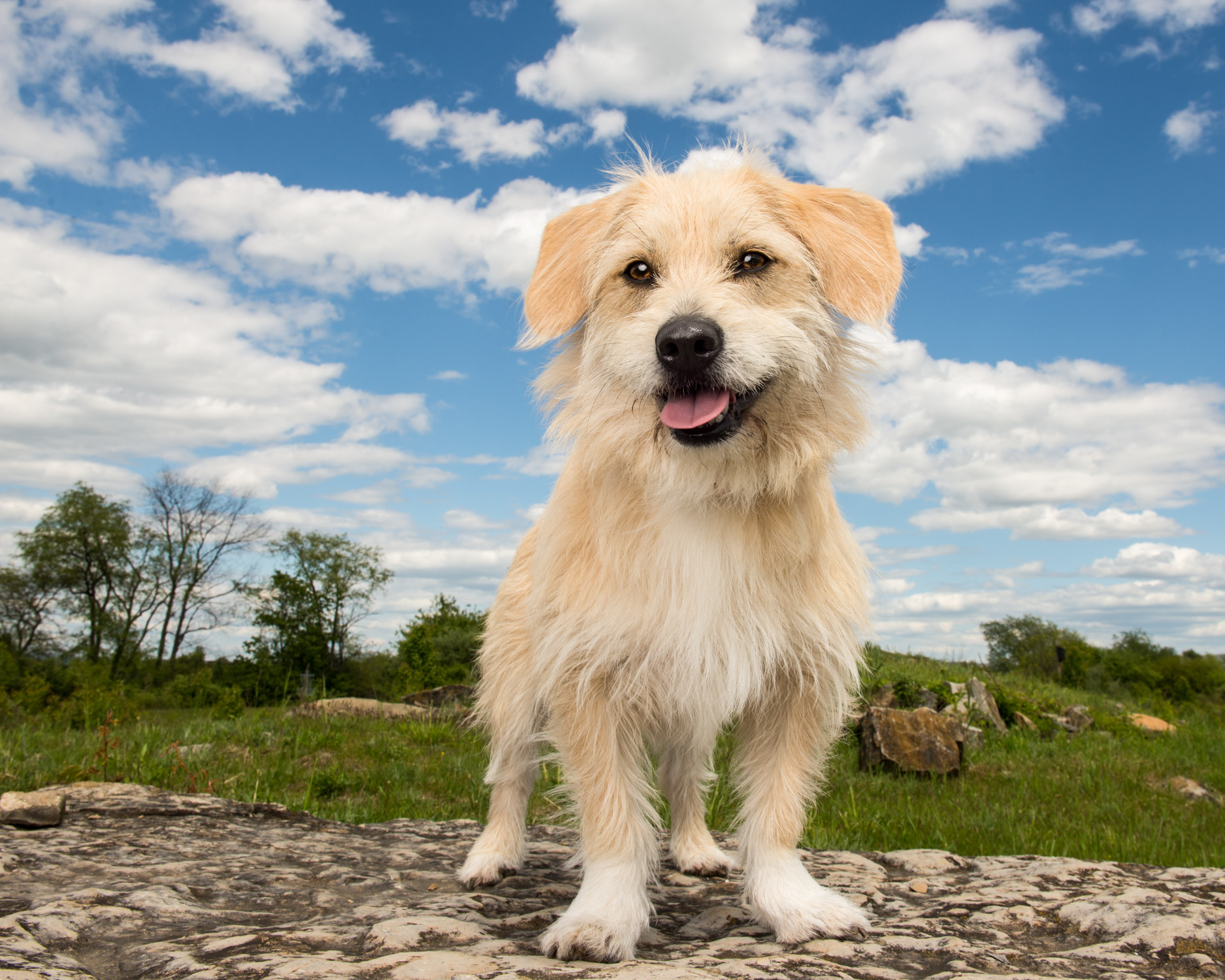 terrier-mix-dog-state-college-park