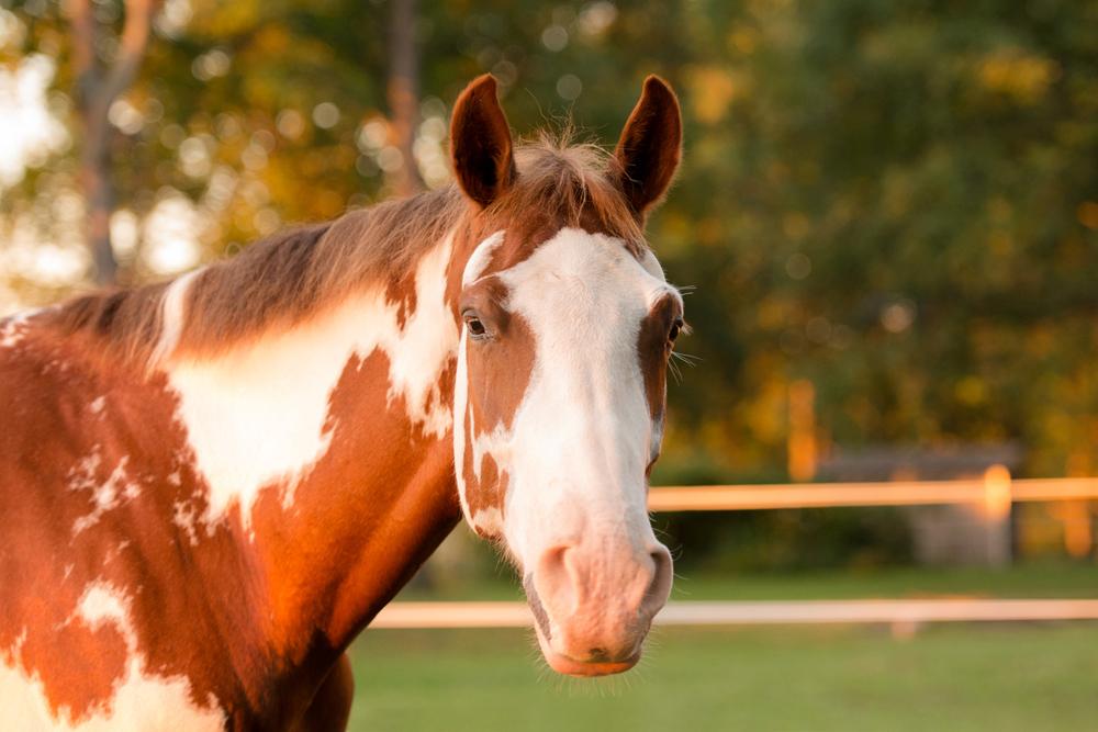 horse-farm-sunset-summer