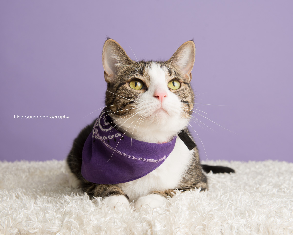 trina-bauer-photography-adoptable-cat