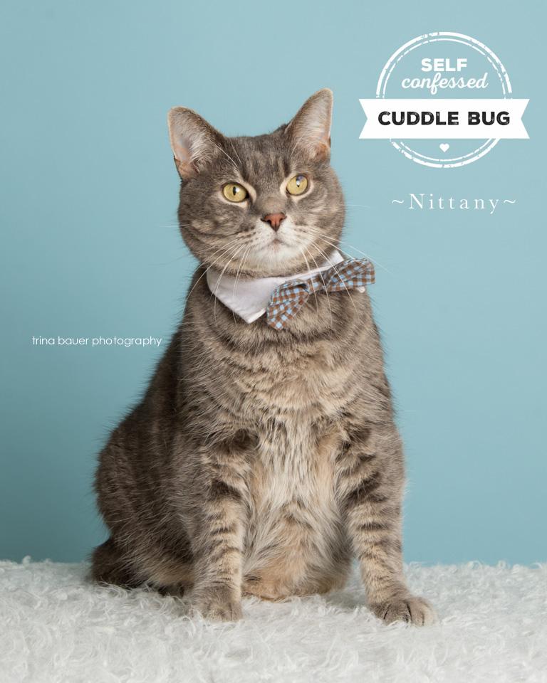 adoptable-cat-bowtie