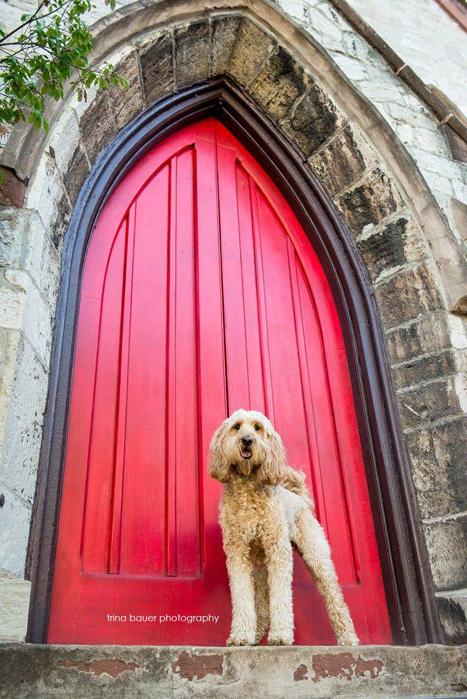 golden doodle.red.door.church.Bellefonte