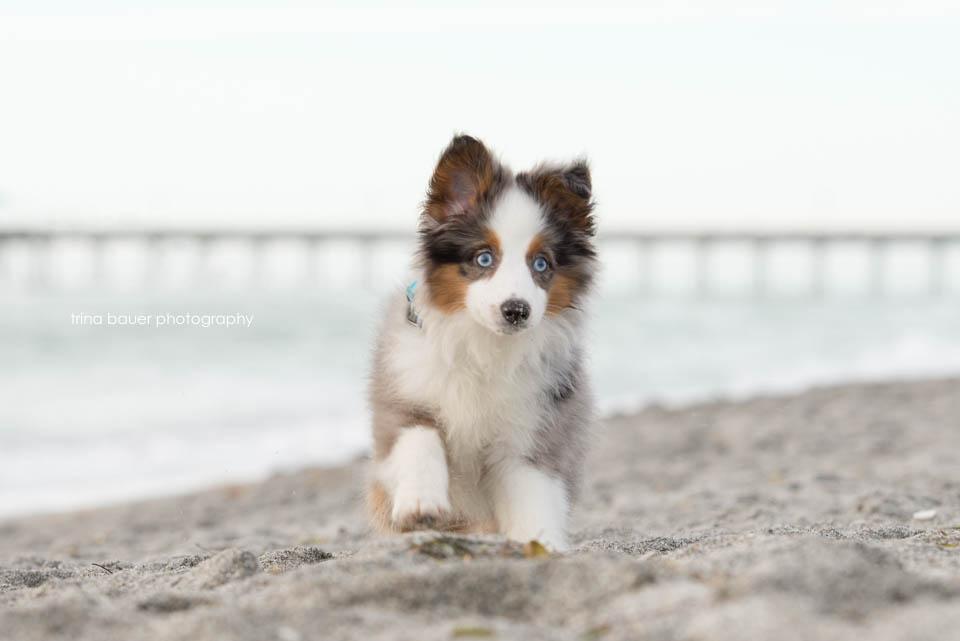 Wilson.puppy.sand.pier