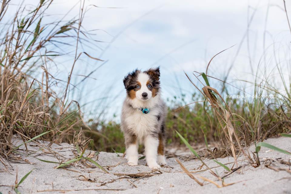 Wilson.puppy.grass.dunes.sky
