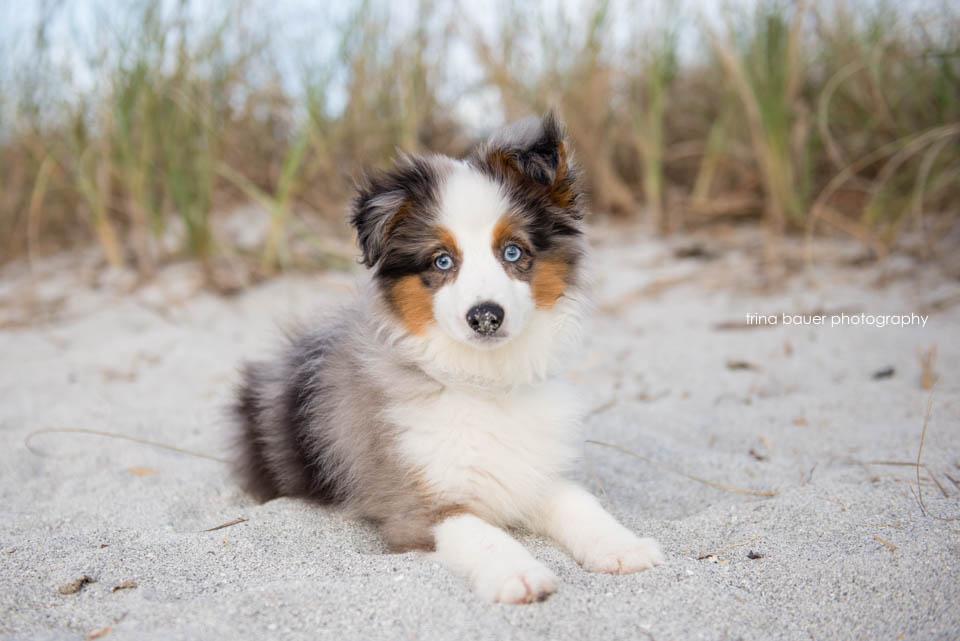 Wilson.puppy.sand.blue.sky