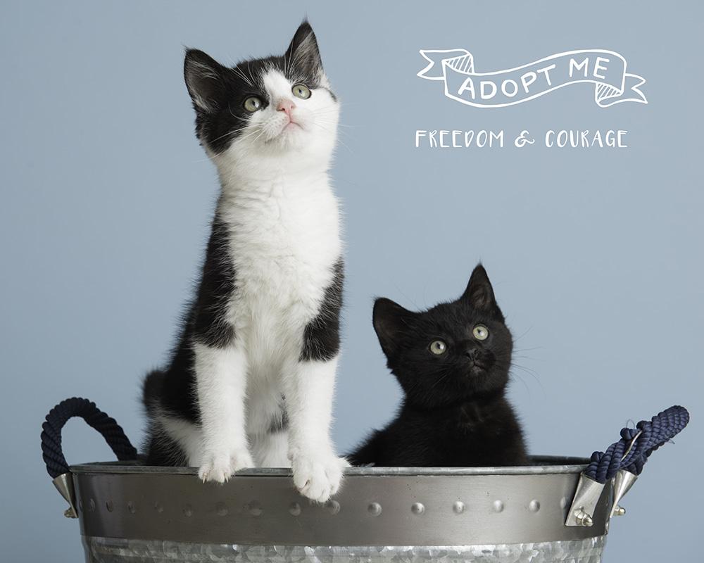 adoptable PAWS kittens