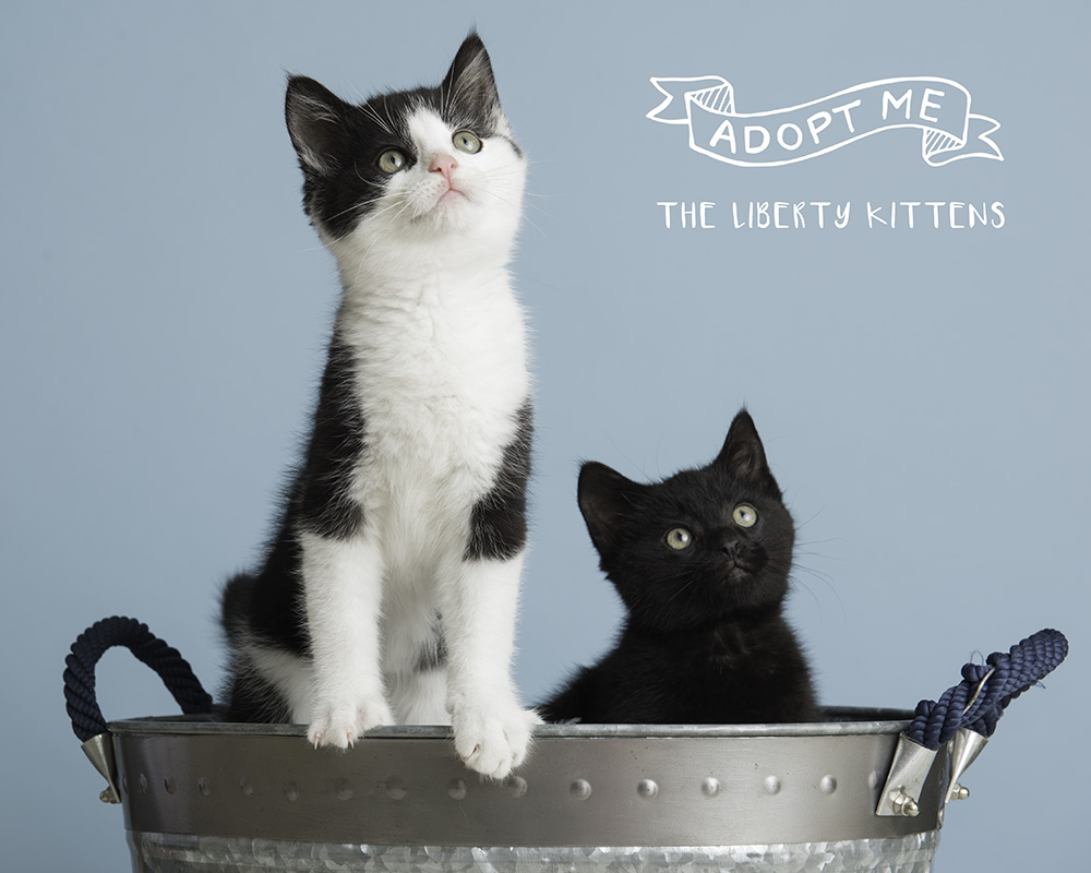 Trina.Bauer.photography.shelter.cats