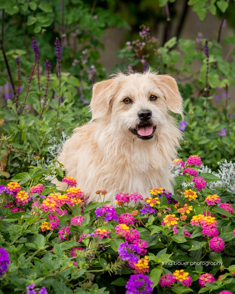 Kita.flowers.Penn.State.jpg