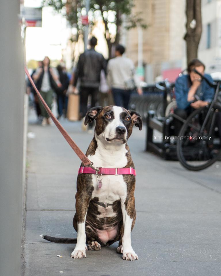 street dog.New.York
