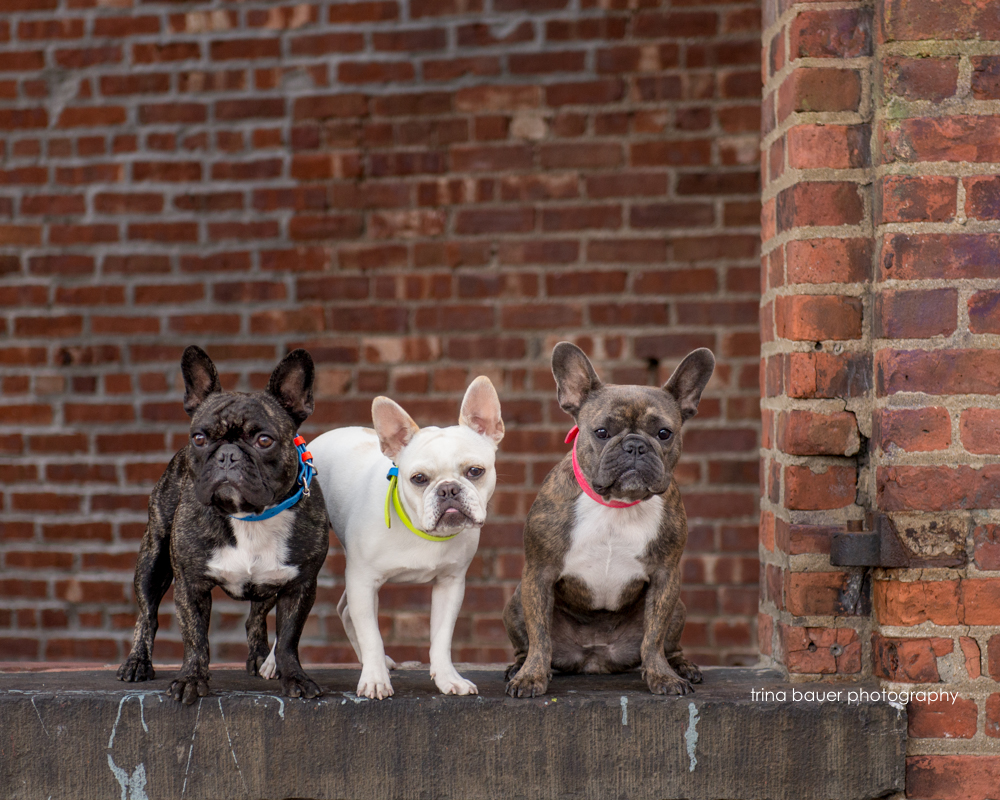 Frenchies.New.York.City