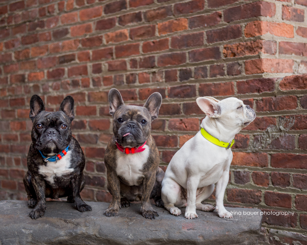 Frenchies.Dumbo.New.York.City