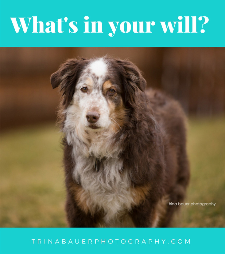 What's in your will?