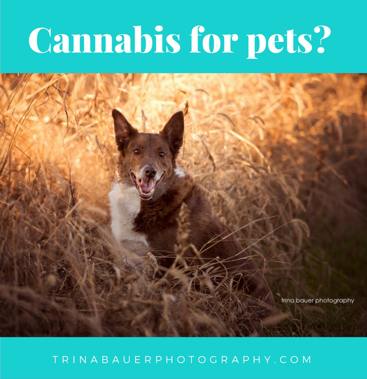 Cannabis for pets?