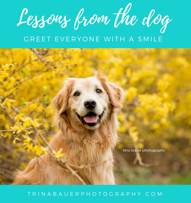 Lessons from the dog - greet everyone with a smile