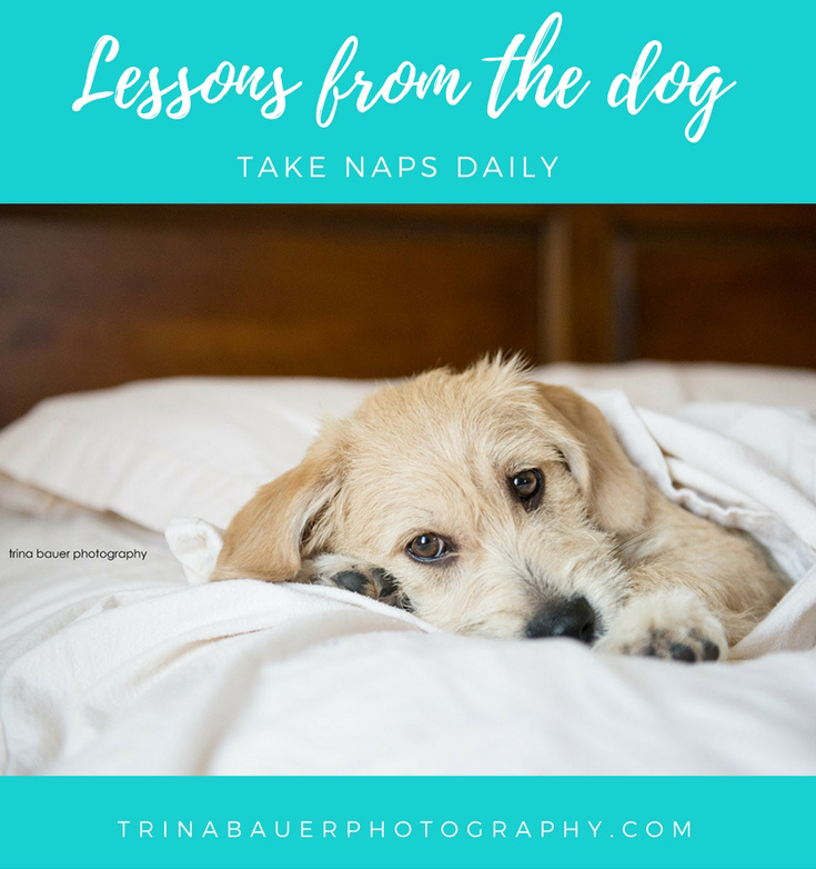 Lessons from the dog - Take naps daily