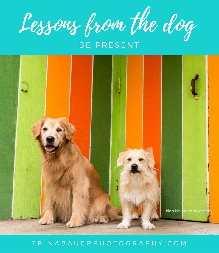 Lessons from the dog - Be present