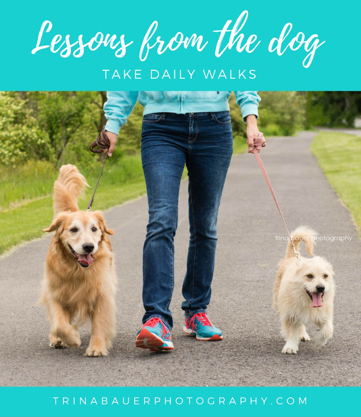 Lessons from the dog - walk daily