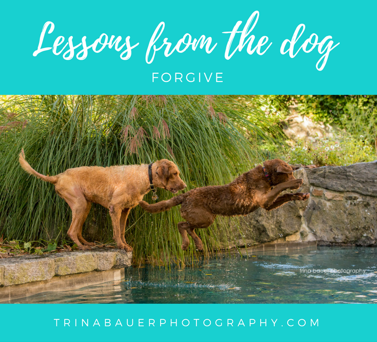 Lessons from the dog - Forgive