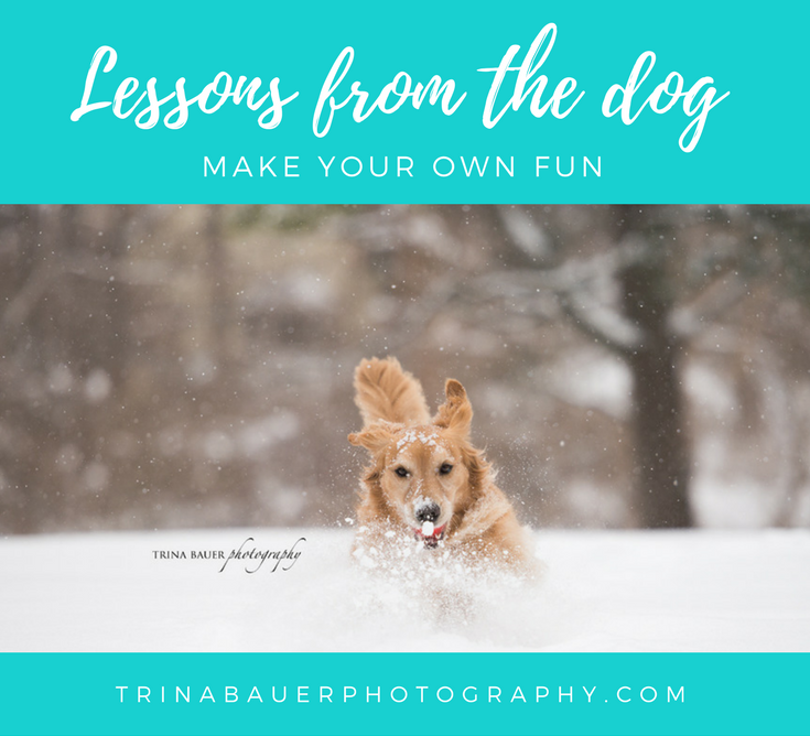 Lessons from the dog - Make your own fun